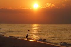 Yellow Sun East of Pier (purduebob) Tags: sunrise yellow pier heron