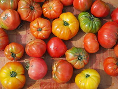 colorful tomatoes (Kirlikedi) Tags: juicy delicious salad vitamin nature vegetable antioxidant agriculture bay october sos amorphous background colored diet drop farm farmer feed field food fresh garden gourmet green handle harvest healthy heirloom irrigation mature natural organic piece plant production raw red seed slice sliced slit spacious tomato tomatopaste vegetables vegetarian water weed wrinkled