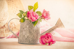 Summer roses (Ro Cafe) Tags: stilllife hat pink summer roses blooms blossom watercan romantic shabby textured pastelcolours nikkormicro105f28 nikond600
