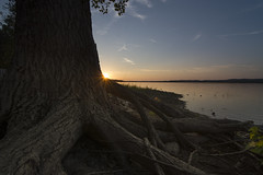 I am the roots of the tree (Barbara A. White) Tags: tree roots sunset lensstar ottawariver constancebay treeroots