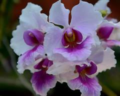 DSC_5454 e5 10x8 (J Telljohann) Tags: singapore flowerdome