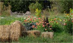 a country garden in autumn