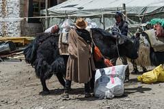 D4I_1374 (riccasergio) Tags: china cina tibet kora kailash alidiqu xizangzizhiqu cn