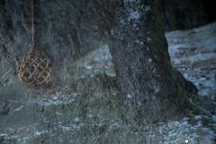 rocca 94 (formicacreativa) Tags: roccacorneta cornoallescale bologna appenninotoscoemiliano appennino erba paesaggio persone campo albero ritratto cielo sasso ghiaccio freddo inverno farnè chiesinafarnè funghi fungo neve ice gelificazione macro legno animale muschio sovrapposizioni astratto abstract