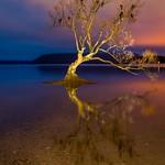 That Wanaka Tree-11 thumbnail