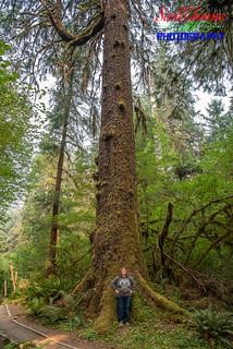 Tall Tree, Eh?