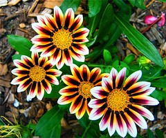 Gorgeous Flowers (Stanley Zimny (Thank You for 32 Million views)) Tags: flower botanical garden skylands nj pattern