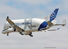 BellugaXL_Airbus_F-WBXL-010 (in explore) (Ragnarok31) Tags: airbus a330 a330xl beluga xl fwbxl cargo a330743l