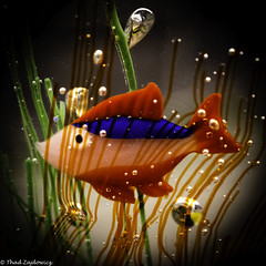 Murano Glass Fish (Thad Zajdowicz) Tags: zajdowicz pasadena california macro closeup primelens 100mm canon eos 5dmarkiii 5d3 dslr digital availablelight lightroom indoor inside color light shadow ef100mmf28lmacroisusm square 1x1 red white blue colour fish glass murano art sculpture vignette