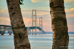 Birches & a Bridge (mswan777) Tags: shore coast 70300mm sigma d5100 nikon scenic nature outdoor bark travel mackinaw straits bridge point mackinac suspension water glow orange evening sunset birch tree