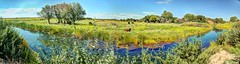 El Rito de Negra Creek (JoelDeluxe) Tags: blue creek cienega cityofsantarosa nm newmexico guadalupecounty marsh thistle pecos sunflower spring seep marshes runs creeks calciumrich waters wrightsmarshthistle pecossunflower joeldeluxe