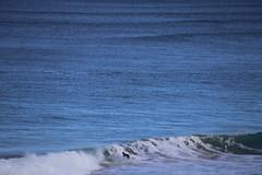 IMG_3663 (gervo1865_2 - LJ Gervasoni) Tags: surfing with whales lady bay warrnambool victoria 2017 ocean sea water waves coast coastal marine wildlife sealife blue photographerljgervasoni