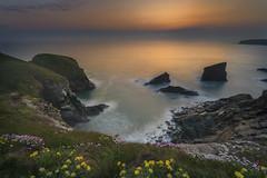 New Light (Anne Strickland) Tags: bedruthansteps cornwall earthfocusphototours englishcoast nisifiltersusa northcornwallcoastline ukcoasts longexposureseascape clifftop wildflowers
