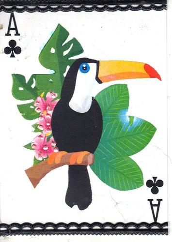 Toucan-A apc