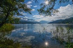 Morning silence ... (milance1965) Tags: millstättersee österreich kärnten blau schwan nikon tokina nikond7200 tokina1116