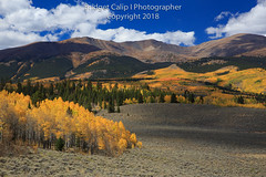 Autumn's Glory (Bridget Calip - Alluring Images) Tags: 2018 4x4road alluringimagescolorado autumn bridgetcalip colorado decidioustrees fall forebayreservoir llc lakecounty mtelbert rockymountains sanisabelnationalforest twinlakes alpenglow aspentrees blueskies camping coniferoustrees fishing forest freshair hiking leafpeeping ponds recreation reflections thegreatoutdoors trail water