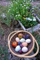 Eggs, Plums and Heirloom Tomatoes (jbwutx) Tags: taos goji cabins san cristobal new mexico eggs plums tomatoes