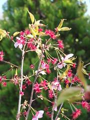 a (62) (hiromi89) Tags: japan beauty beautiful scenery flower wood pond