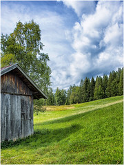 green is not just a color ... ( 2 ) (miriam ulivi) Tags: miriamulivi nikond7200 austria seefeldintirol prati verde meadows green fienile barn alberi trees abeti firs cielo sky nuvole clouds nature