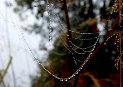 Web Necklace (C-Aida) Tags: web necklace nature macro dew drops water droplet beauty light meditation zen tao design fineart