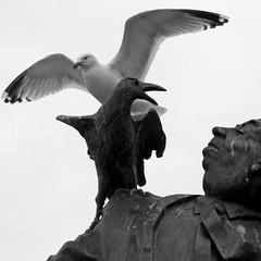 Les oiseaux de Dinard (Les 3 couleurs) Tags: carré square bretagne brittany bw noiretblanc nb dinard oiseaux birds hitchcock statues
