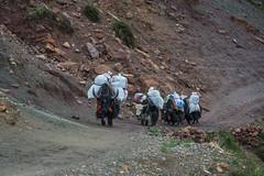 D4I_1523 (riccasergio) Tags: china cina tibet kailash xizangzizhiqu kora alidiqu cn