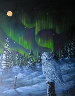 Northern Night Watch