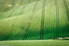 Linee (SDB79) Tags: ururi molise campo verde campagna colline linee