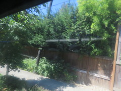 IMG_8313 (Andy E. Nystrom) Tags: bellevue washington wa bellevuewashington