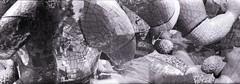 Buddha Blender (pho-Tony) Tags: blender lomolcw yorkshiresculpturepark kentmere100 black white blackandwhite bw monochrome lomography lomolcwide lcwide blend 35mm 17mm fullframe halfframe minigon 1 ultrawideangle lens minigon17mm superwide ultrawide rodinal ysp nikidesaintphalle buddha