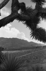 Summer Clouds (squirtiesdad) Tags: joshua tree clouds hills trail high desert mountains hesperia diyselfscanning selfdeveloped epson v600 monochrome blackandwhite bw analogue analog aristaedu arista iso100 35mm film vivitar 220sl