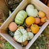 Harvest So Far (obsequies) Tags: fall autumn harvest pumpkin pumpkins leaves canada homestead garden gardening spooky spoopy bokeh whimsy whimsical gourd squash goldnuggetsquash goldnugget minifarm white crate cottage shabby chic fairy fae forest nature earthy mood moody aesthetic artsy halloween life country food market
