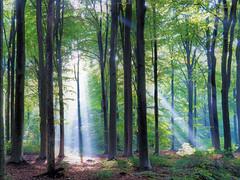 Dreamforest (Jenne Barneveld) Tags: magical light sunbeam mystical morninglight morningwalk walk dreaming dream dreamy leaves trees autumn olympus magicalwonderland wonderland wheremagichappens musicalforest rayoflight netherlands