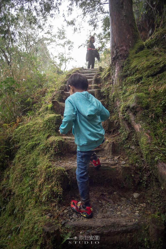 太平山翠峰湖環山步道 |走在泥濘的道路上,只為途中美景 | 宜蘭大同鄉62