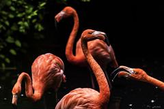 DISCUSSIONE    ----    DISCUSSION (Ezio Donati is ) Tags: uccelli birds animali animals acqua water stagni ponds alberi trees colori colors natura nature italia parcodelticino provinciadipavia