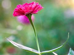 flowers in September (uiriidolgalev) Tags: flowers september
