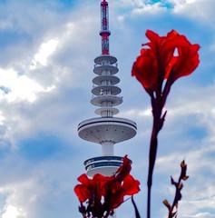 FERNSEHTURM HAMBURG (aschwarz12@t-online.de) Tags: rot blume urban city fernsehturm germany hamburg