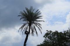 IMG_6147 (mohandep) Tags: hessarghatta lakes karnataka butterflies birding nature wildlife insects signs food