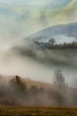 The beauty of the fog (Rita Eberle-Wessner) Tags: landschaft landscape nebel fog baum tree bäume trees wald forest hügel hills wiese meadow odenwald foggy neblig