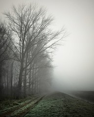 Felder im Nebel 2 (Ljot) Tags: nebel fog fields moodynature daybreak winter tree trees river morning mist mistymood germany