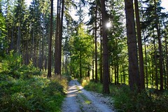 summer moods (JoannaRB2009) Tags: path trail road forest woods trees summer mood light sunlight sunlit długopoledolne długopolezdrój view lowersilesia dolnyśląsk polska poland landscape green