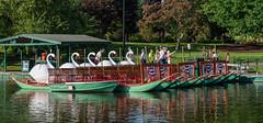 #Its5oclock (Peter Tieleman) Tags: boston swanboats flickrfriday its5oclock