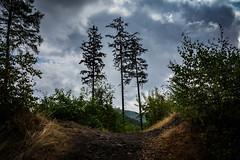 Oerlinghausen (mai.qu) Tags: oerlinghausen ostwestfalen owl outdoor teutoburger wald trees lippe country wood germany