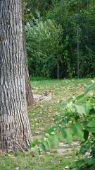 2018-09-07_15-00-37_ILCE-6500_DSC01601 (Miguel Discart Photos Vrac 3) Tags: 2018 202mm animal animalphotography animals animalsupclose animaux belgie belgique belgium botanicalgarden brugelette e18135mmf3556oss focallength202mm focallengthin35mmformat202mm ilce6500 iso500 jardinbontanique nature naturephotography pairidaiza paradisio pet sony sonyilce6500 sonyilce6500e18135mmf3556oss zoo