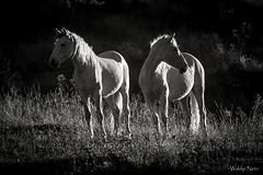 Cavalos (Waldyr Neto) Tags: cavalos horses natureza trêspicos petp