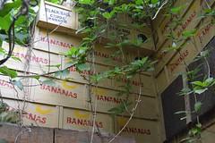 Eden Project (cn174) Tags: roadtrip south england uk cornwall kernow edenproject eden project rainforest biomes plants staustell tropical mediterranean