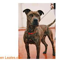 Jindy - en adopción (Leales.org • tu guía animable) Tags: adopta adoptar adoptanocompres noalmaltratoanimal adopción sebusca extraviado perdido perro gatos lealesorg