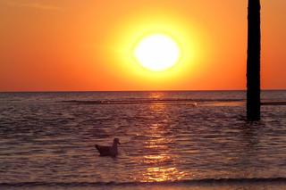 Sonnenuntergang, Strand St. Peter-Ording