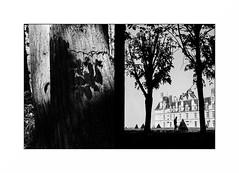 Ecouen (Punkrocker*) Tags: olympus pen ft analog zuiko 38mm 3818 film kodak trix 400 nb bwfp tree forest castle ecouen valdoise france foret halfframe demi