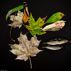 Fall is in the air (Fred Roe) Tags: nikond810 nikkorafs80400mmf4556ged nature leaves